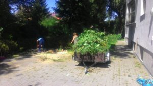 Realizujeme rizikové kácení vzrostlých stromů lanovou technikou.